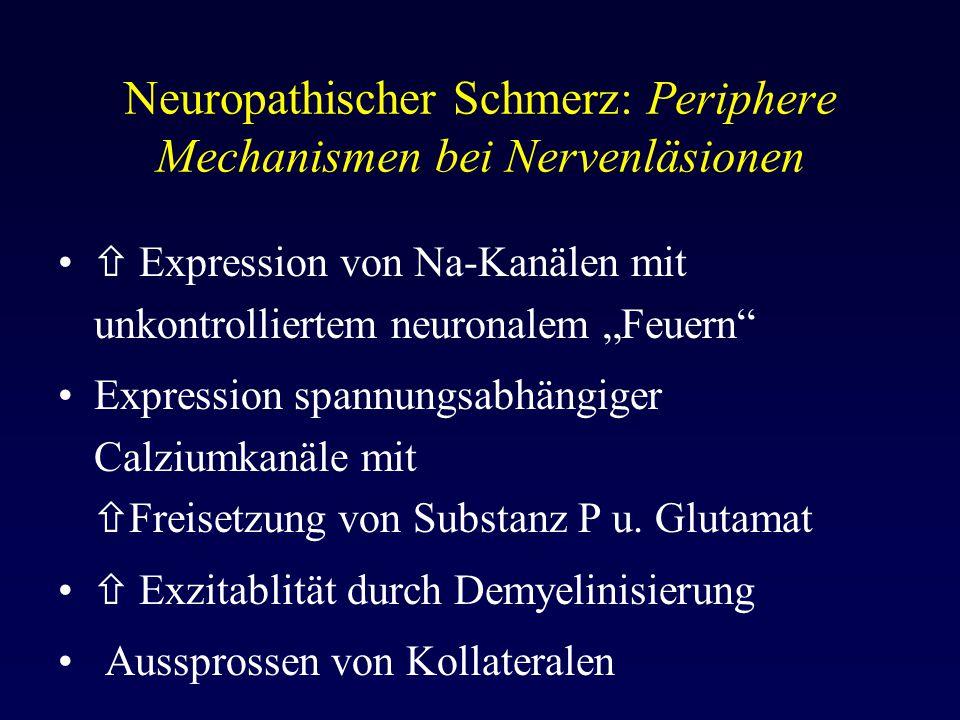"""Neuropathischer Schmerz: Periphere Mechanismen bei Nervenläsionen  Expression von Na-Kanälen mit unkontrolliertem neuronalem """"Feuern"""" Expression span"""