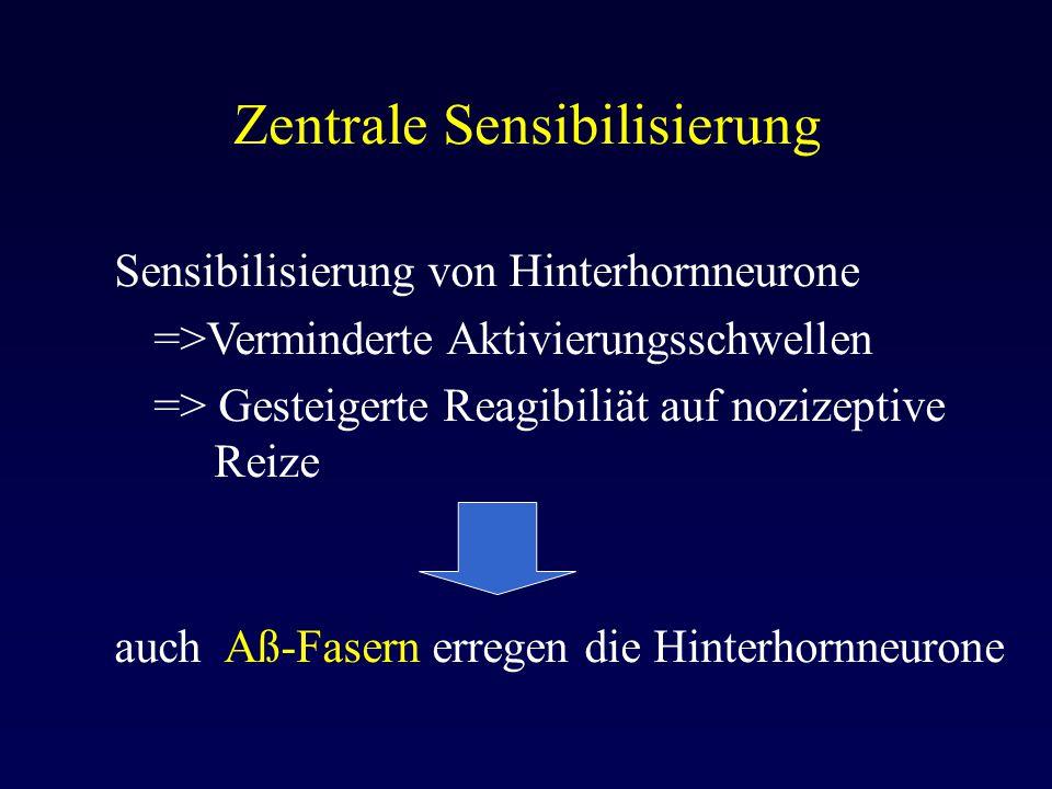 Zentrale Sensibilisierung Sensibilisierung von Hinterhornneurone =>Verminderte Aktivierungsschwellen => Gesteigerte Reagibiliät auf nozizeptive Reize