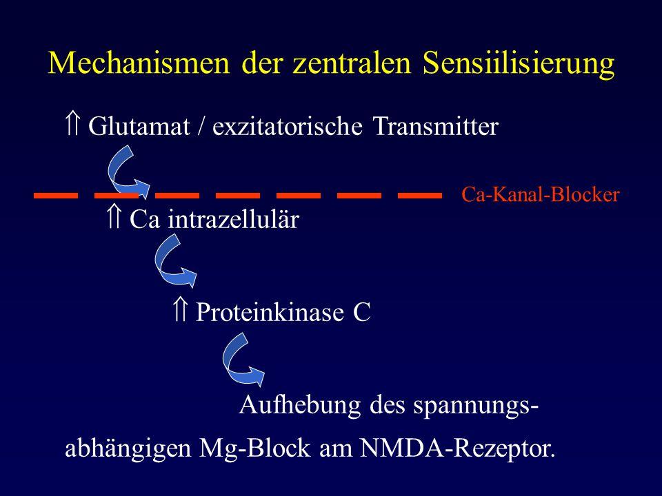Mechanismen der zentralen Sensiilisierung  Glutamat / exzitatorische Transmitter  Ca intrazellulär  Proteinkinase C Aufhebung des spannungs- abhäng