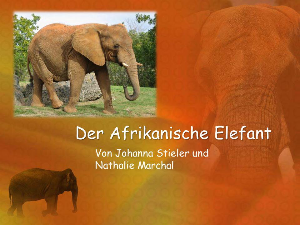Der Afrikanische Elefant Von Johanna Stieler und Nathalie Marchal