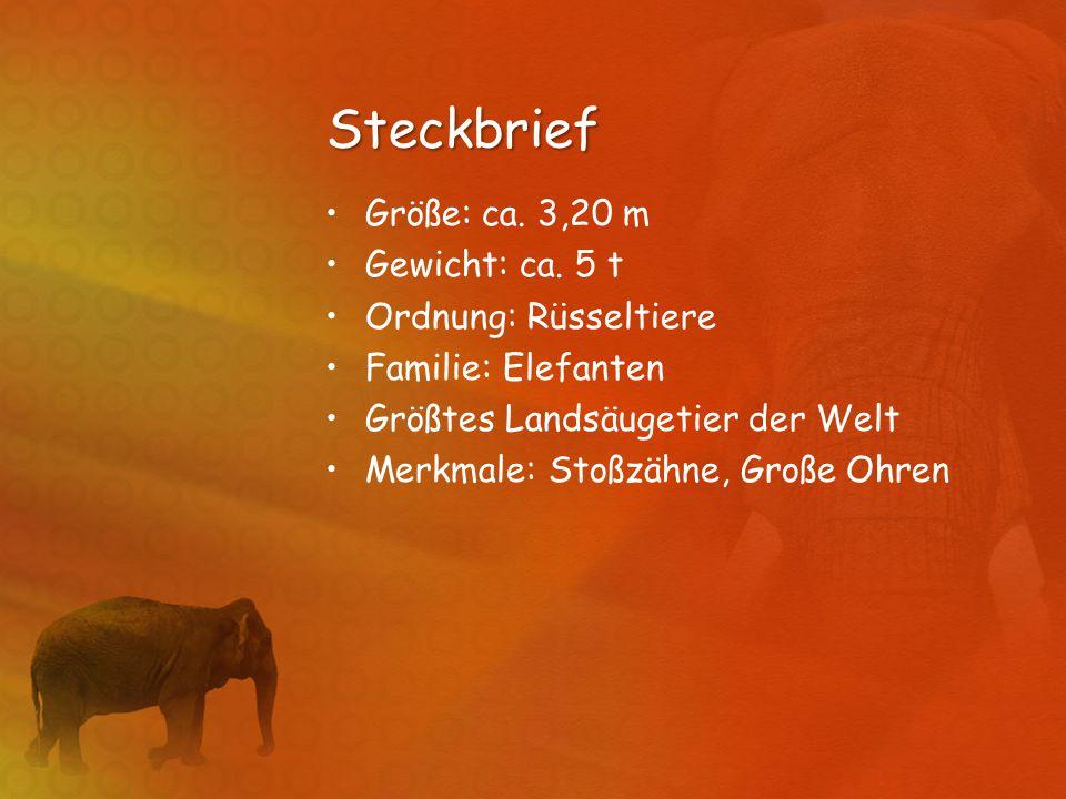 Steckbrief Größe: ca. 3,20 m Gewicht: ca. 5 t Ordnung: Rüsseltiere Familie: Elefanten Größtes Landsäugetier der Welt Merkmale: Stoßzähne, Große Ohren
