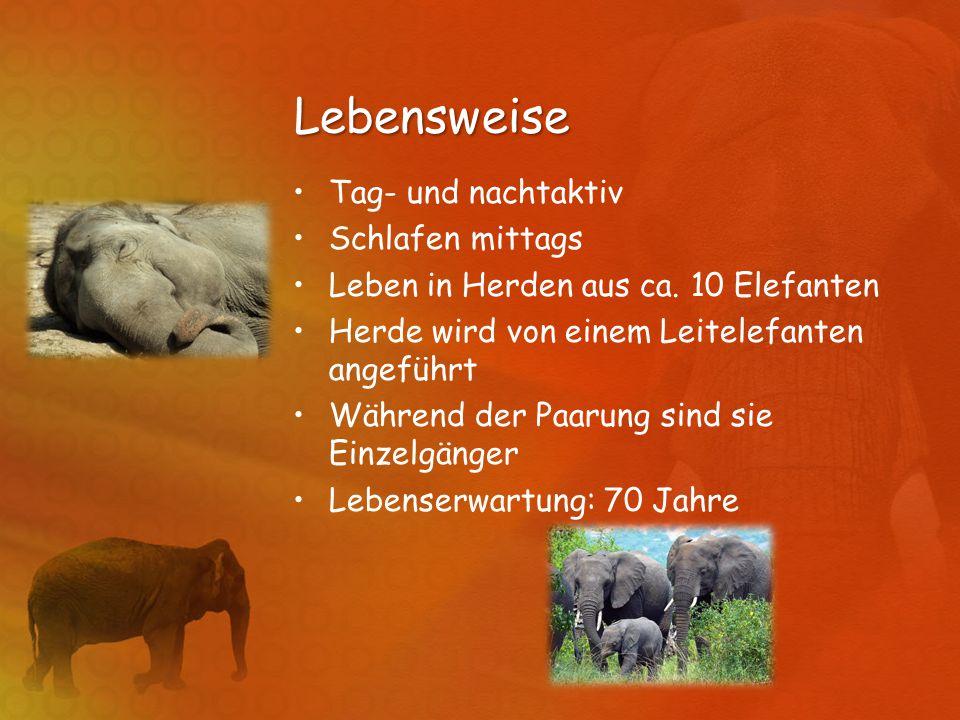 Lebensweise Tag- und nachtaktiv Schlafen mittags Leben in Herden aus ca. 10 Elefanten Herde wird von einem Leitelefanten angeführt Während der Paarung
