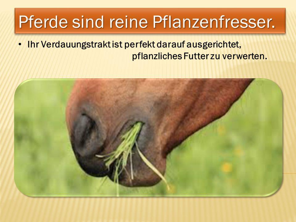 Ihr Verdauungstrakt ist perfekt darauf ausgerichtet, pflanzliches Futter zu verwerten.