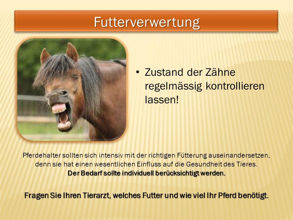 Zustand der Zähne regelmässig kontrollieren lassen! Pferdehalter sollten sich intensiv mit der richtigen Fütterung auseinandersetzen, denn sie hat ein