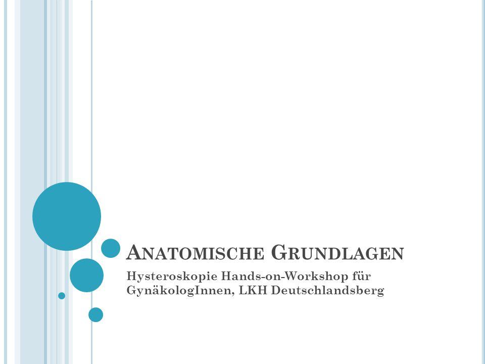 A NATOMISCHE G RUNDLAGEN Hysteroskopie Hands-on-Workshop für GynäkologInnen, LKH Deutschlandsberg