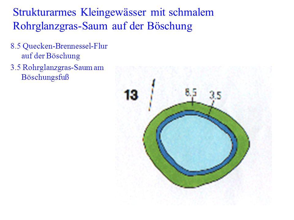Strukturarmes Kleingewässer mit schmalem Rohrglanzgras-Saum auf der Böschung 8.5 Quecken-Brennessel-Flur auf der Böschung 3.5 Rohrglanzgras-Saum am Bö