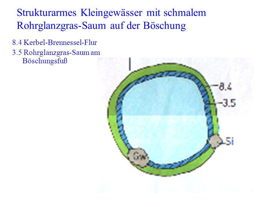 8.4 Kerbel-Brennessel-Flur 3.5 Rohrglanzgras-Saum am Böschungsfuß