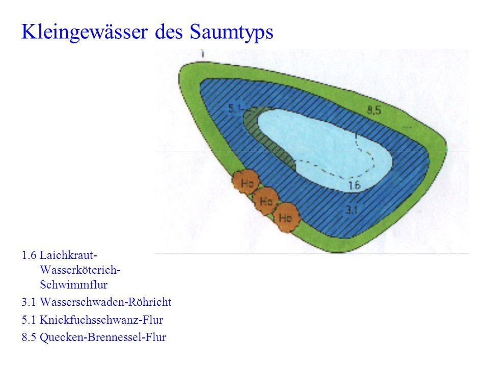 Kleingewässer des Saumtyps 1.6 Laichkraut- Wasserköterich- Schwimmflur 3.1 Wasserschwaden-Röhricht 5.1 Knickfuchsschwanz-Flur 8.5 Quecken-Brennessel-F