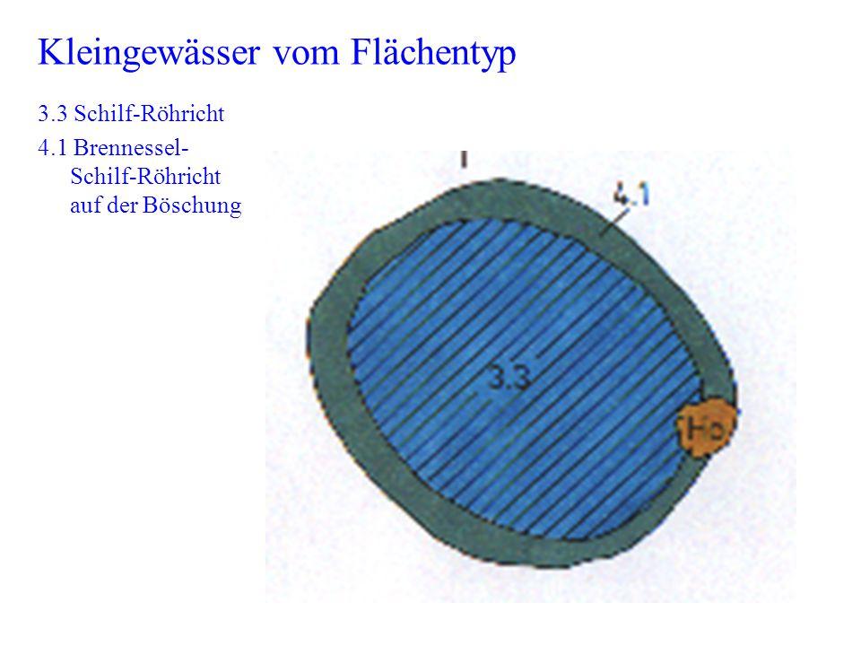 Kleingewässer vom Flächentyp 3.3 Schilf-Röhricht 4.1 Brennessel- Schilf-Röhricht auf der Böschung