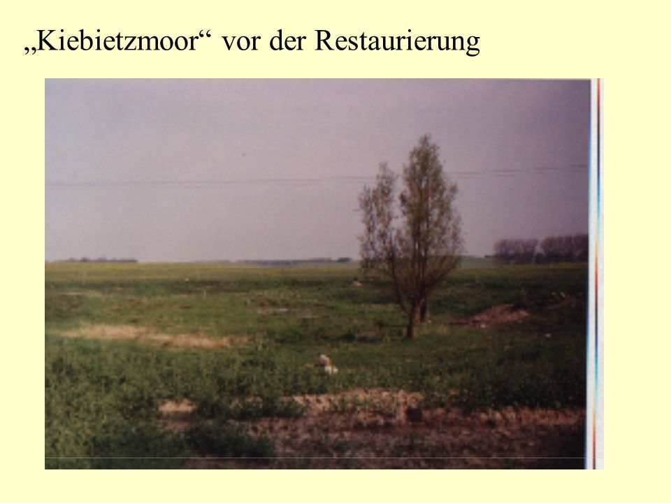 """""""Kiebietzmoor"""" vor der Restaurierung"""