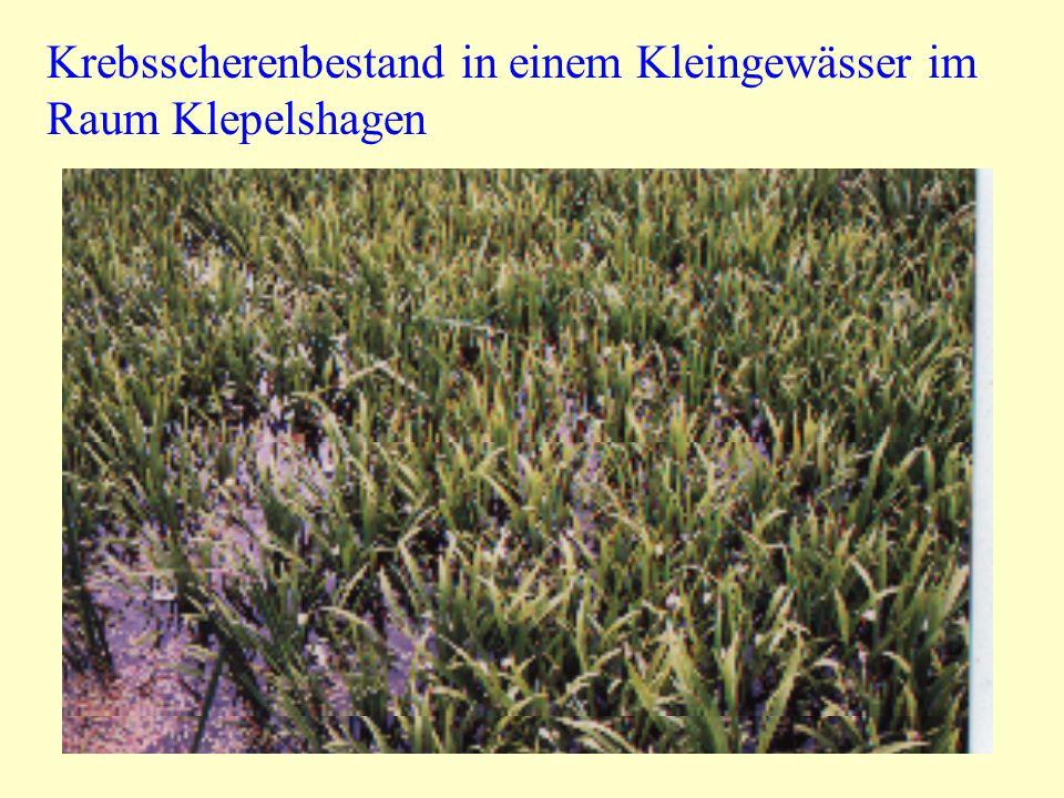 Ansätze für eine vegetationsstrukturelle Typisierung von Kleingewässern Auf der Basis von ca.