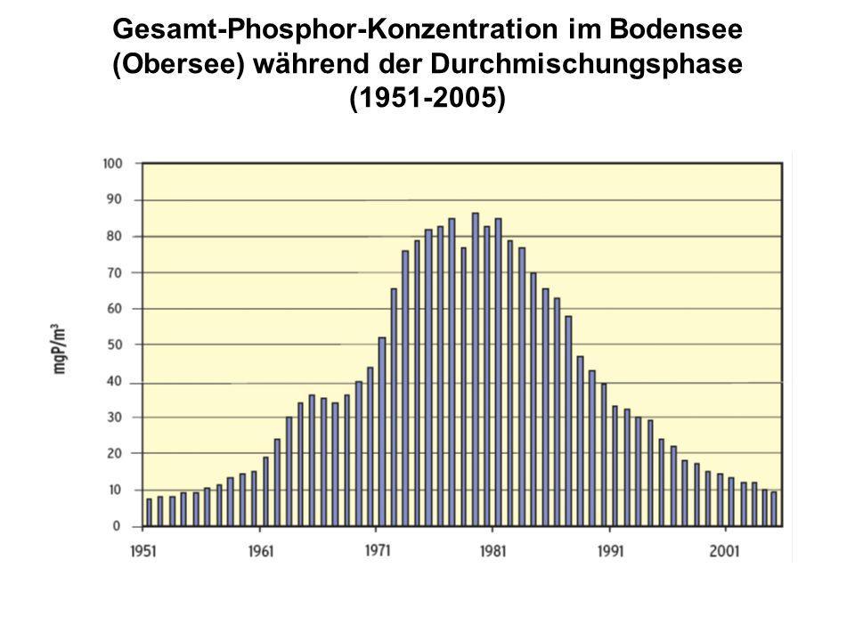 Gesamt-Phosphor-Konzentration im Bodensee (Obersee) während der Durchmischungsphase (1951-2005)