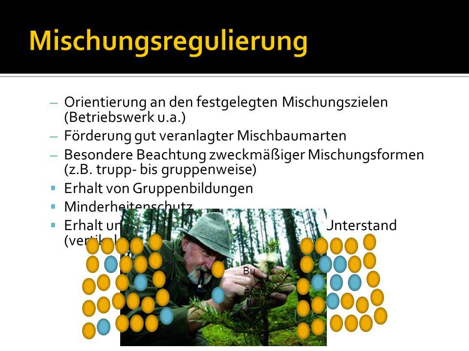 – Orientierung an den festgelegten Mischungszielen (Betriebswerk u.a.) – Förderung gut veranlagter Mischbaumarten – Besondere Beachtung zweckmäßiger M