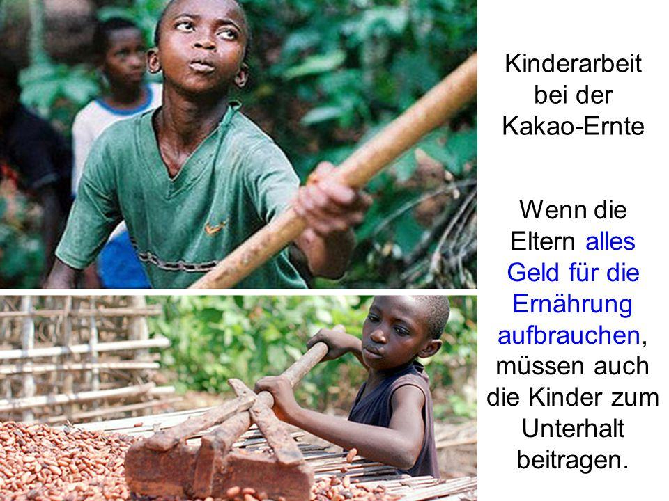 Kinderarbeit bei der Kakao-Ernte Wenn die Eltern alles Geld für die Ernährung aufbrauchen, müssen auch die Kinder zum Unterhalt beitragen.