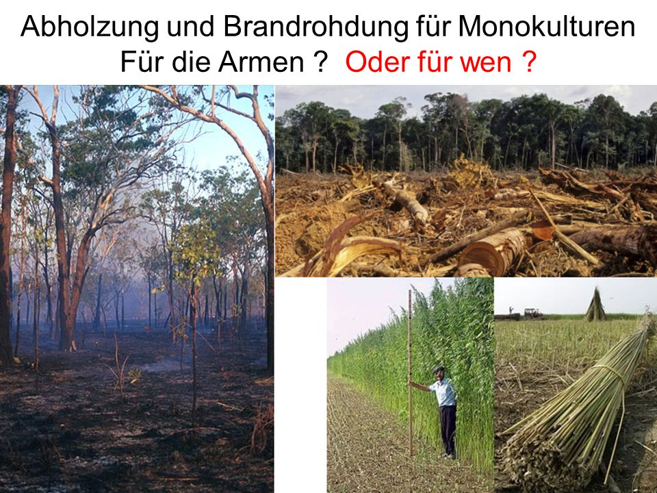 Abholzung und Brandrohdung für Monokulturen Für die Armen ? Oder für wen ?