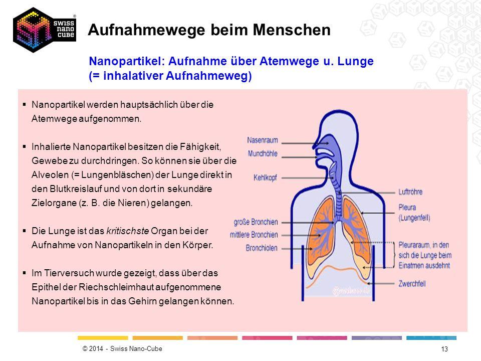 © 2014 - Swiss Nano-Cube 13  Nanopartikel werden hauptsächlich über die Atemwege aufgenommen.  Inhalierte Nanopartikel besitzen die Fähigkeit, Geweb