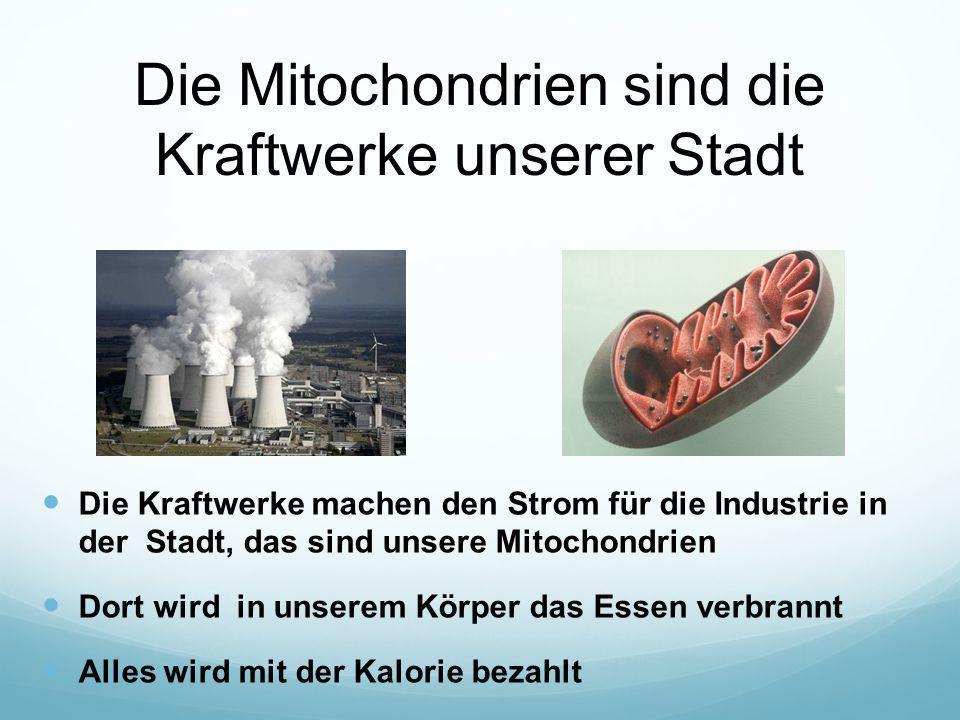Die Mitochondrien sind die Kraftwerke unserer Stadt Die Kraftwerke machen den Strom für die Industrie in der Stadt, das sind unsere Mitochondrien Dort