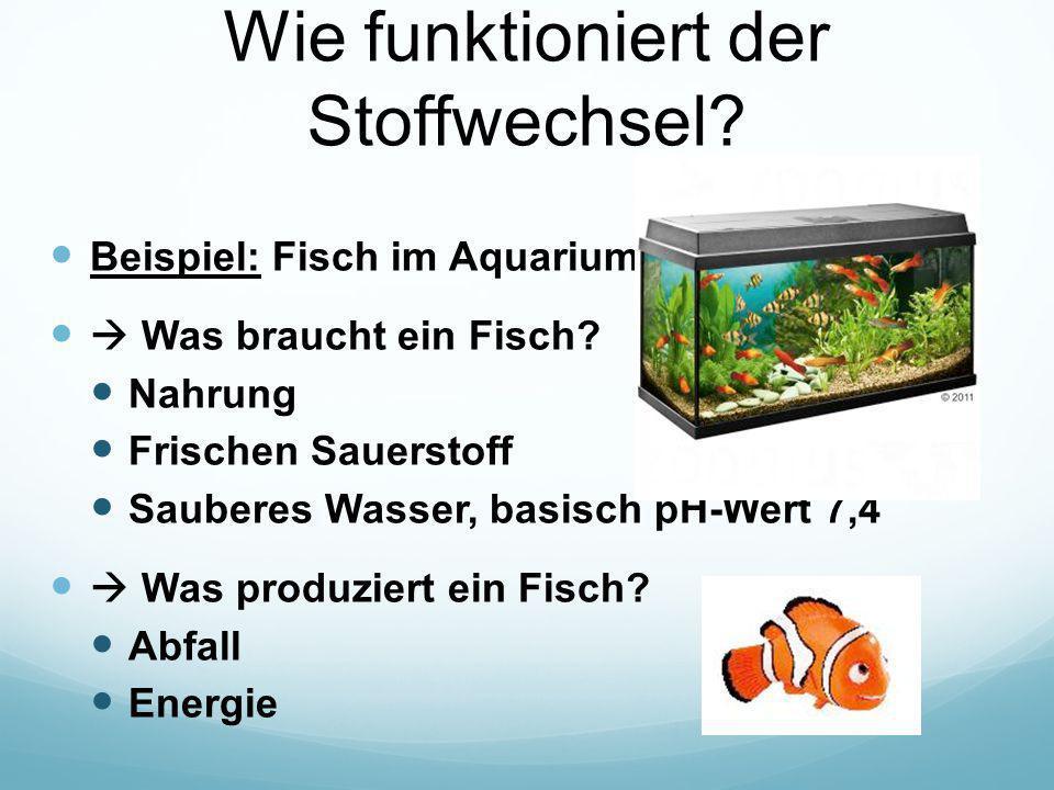 Wie funktioniert der Stoffwechsel? Beispiel: Fisch im Aquarium  Was braucht ein Fisch? Nahrung Frischen Sauerstoff Sauberes Wasser, basisch pH-Wert 7
