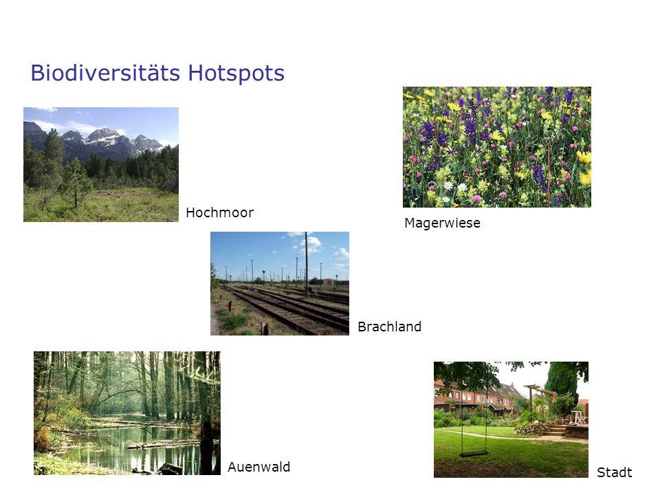 Magerwiese Biodiversitäts Hotspots Auenwald Stadt Hochmoor Brachland