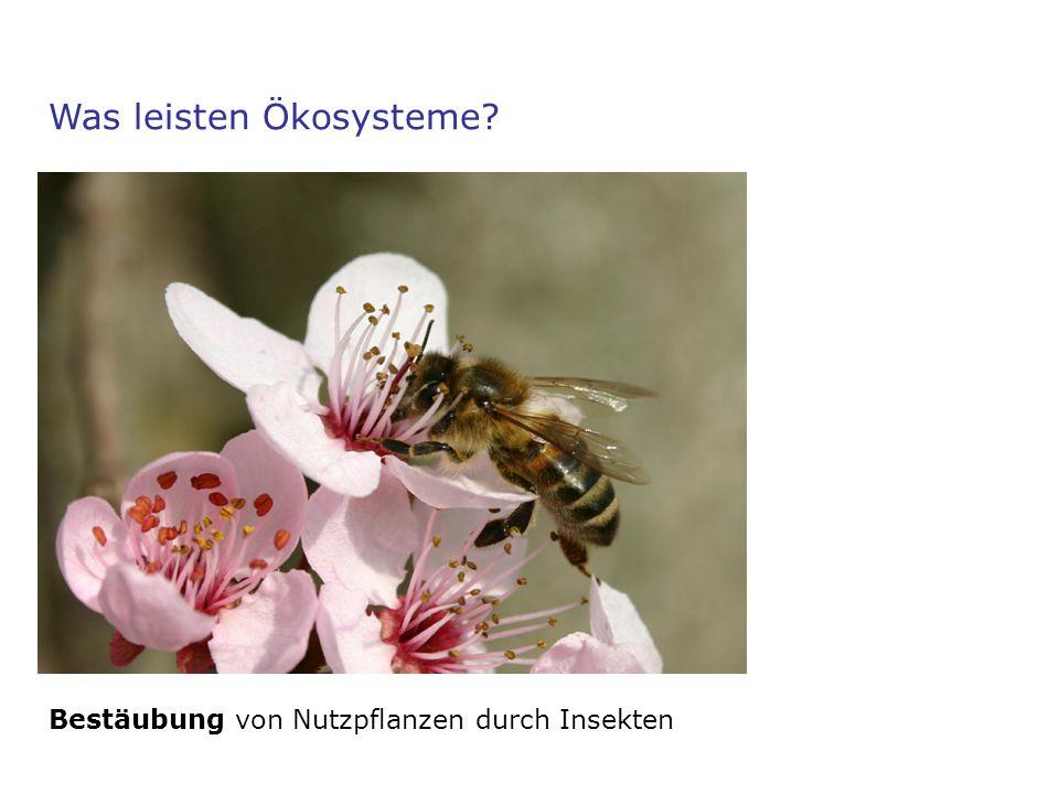 Was leisten Ökosysteme? Bestäubung von Nutzpflanzen durch Insekten