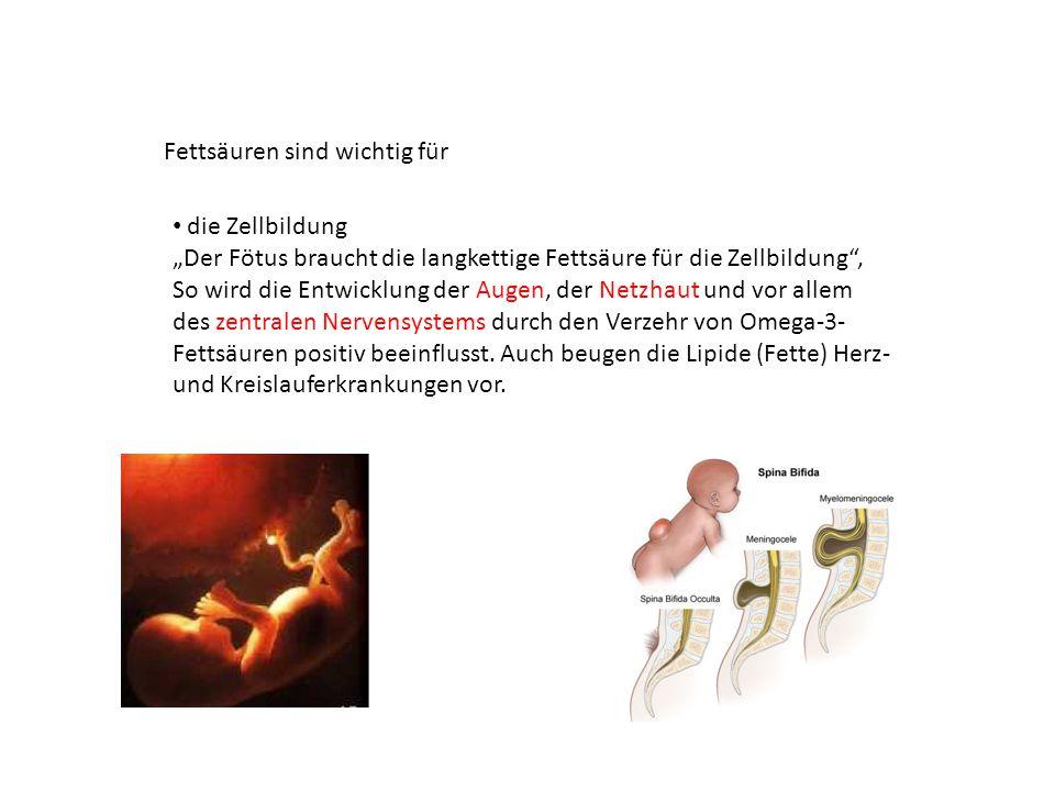 """Fettsäuren sind wichtig für die Zellbildung """"Der Fötus braucht die langkettige Fettsäure für die Zellbildung"""", So wird die Entwicklung der Augen, der"""