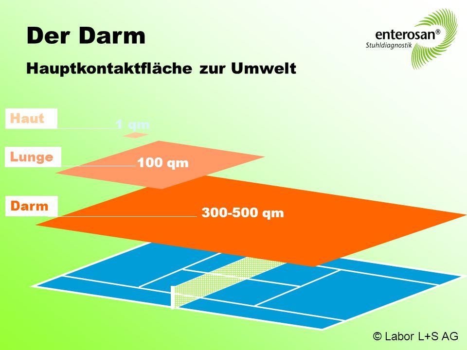Der Darm Hauptkontaktfläche zur Umwelt Darm 300-500 qm Lunge 100 qm Haut 1 qm © Labor L+S AG