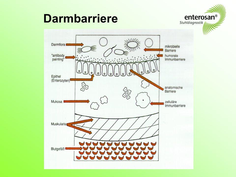Darmschleimhaut-Dilemma Nährstoffe Durchlässigkeit/Resorption Schadstoffe vs.