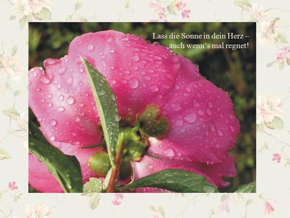 Stell Dir einen Strauß Blumen auf den Tisch – und gleich ist Dir wohl ums Herz!