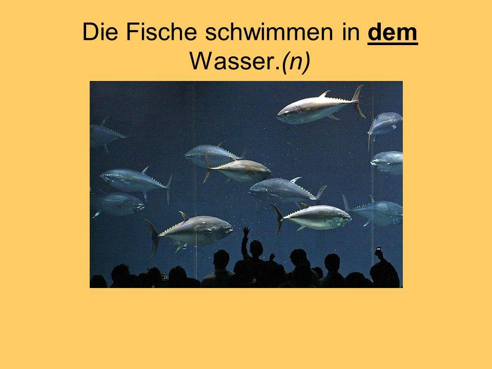 Die Fische schwimmen in dem Wasser.(n)