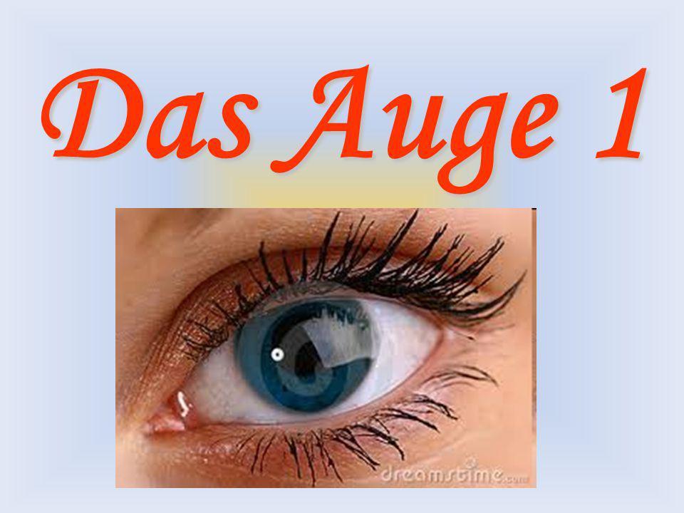 Das Auge 1