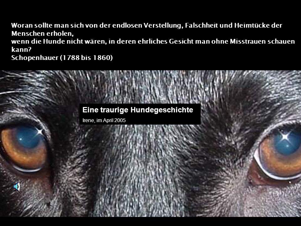 Woran sollte man sich von der endlosen Verstellung, Falschheit und Heimtücke der Menschen erholen, wenn die Hunde nicht wären, in deren ehrliches Gesicht man ohne Misstrauen schauen kann.