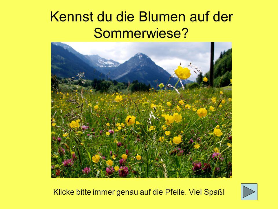 Kennst du die Blumen auf der Sommerwiese? Klicke bitte immer genau auf die Pfeile. Viel Spaß!