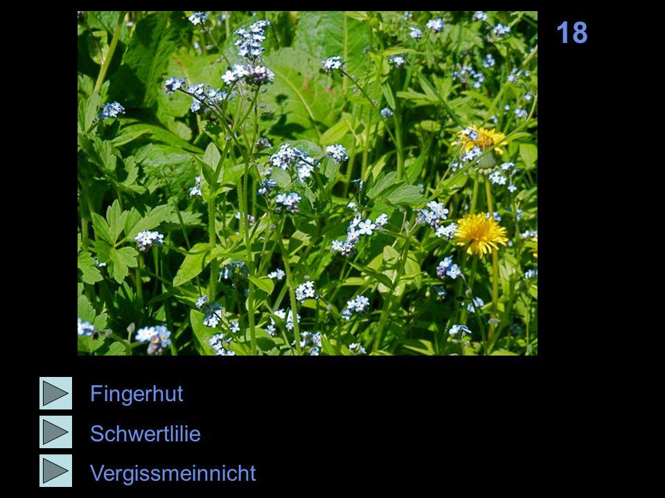 18 Fingerhut Schwertlilie Vergissmeinnicht