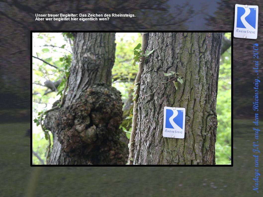 Unser treuer Begleiter: Das Zeichen des Rheinsteigs. Aber wer begleitet hier eigentlich wen?