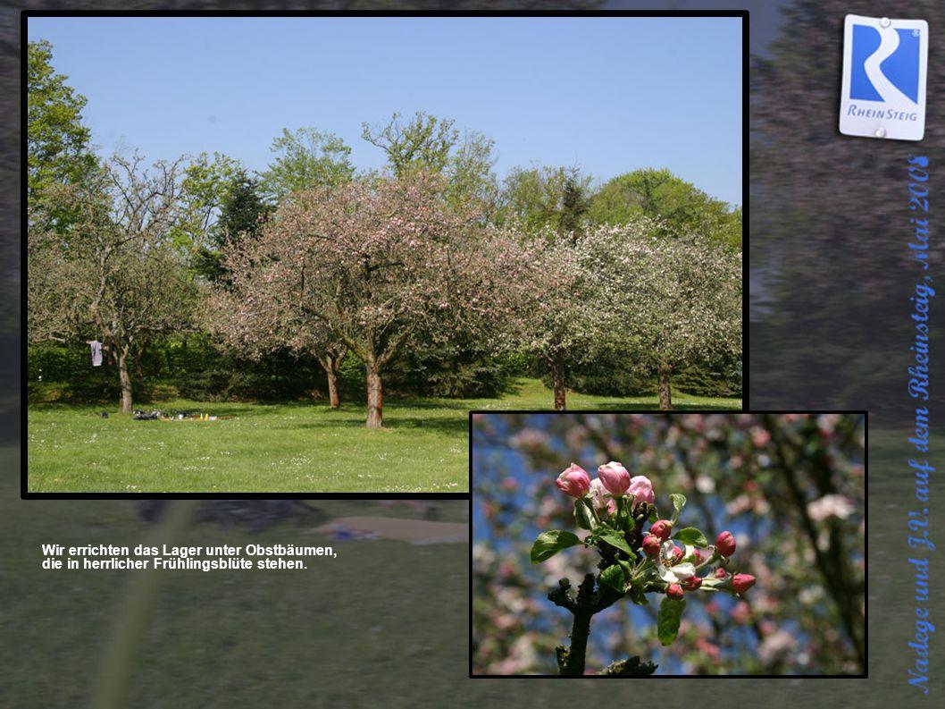 Wir errichten das Lager unter Obstbäumen, die in herrlicher Frühlingsblüte stehen.