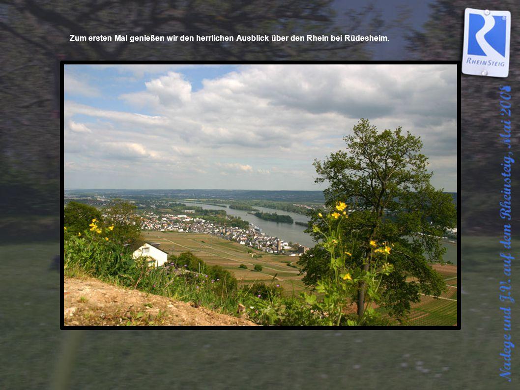 Zum ersten Mal genießen wir den herrlichen Ausblick über den Rhein bei Rüdesheim.