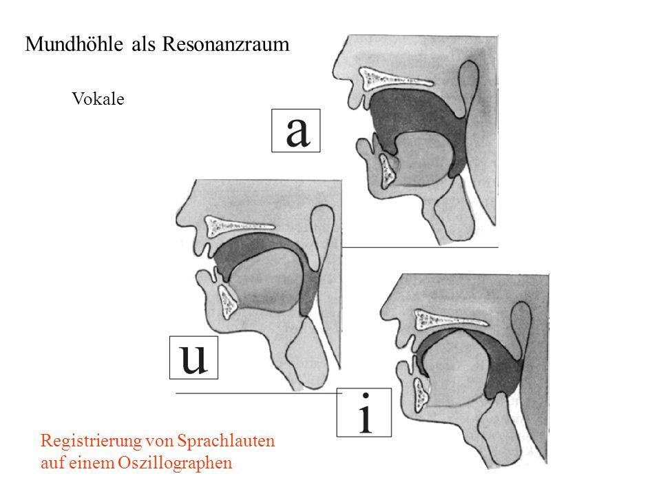Vokale Registrierung von Sprachlauten auf einem Oszillographen Mundhöhle als Resonanzraum