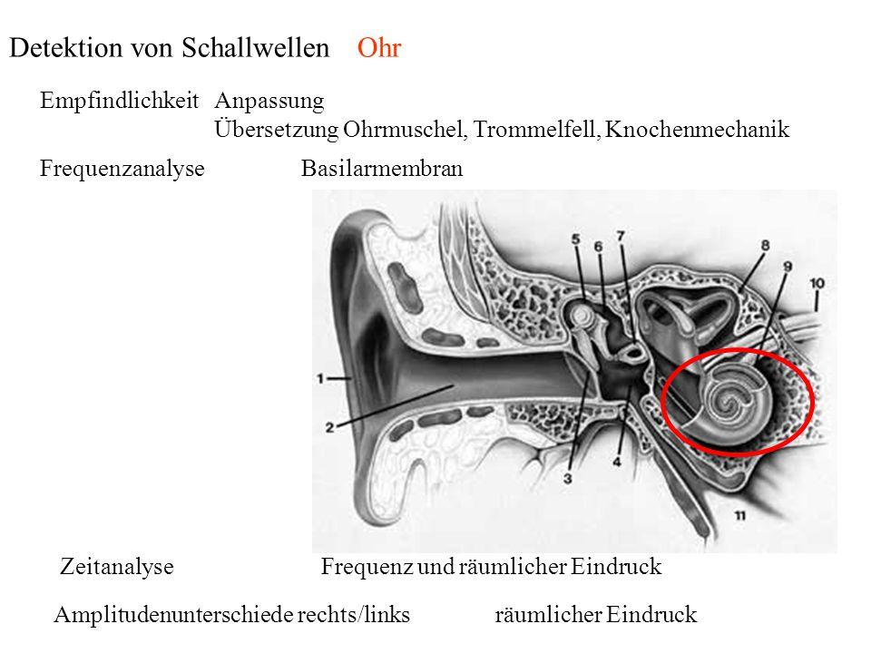 EmpfindlichkeitAnpassung Übersetzung Ohrmuschel, Trommelfell, Knochenmechanik ZeitanalyseFrequenz und räumlicher Eindruck Amplitudenunterschiede recht