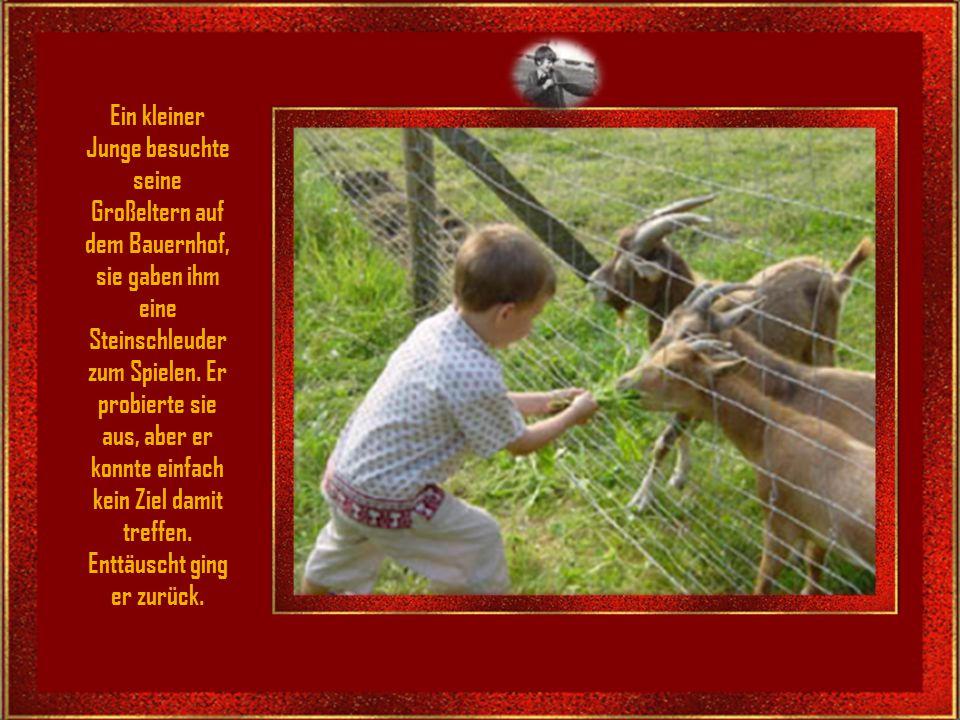 Ein kleiner Junge besuchte seine Großeltern auf dem Bauernhof, sie gaben ihm eine Steinschleuder zum Spielen.