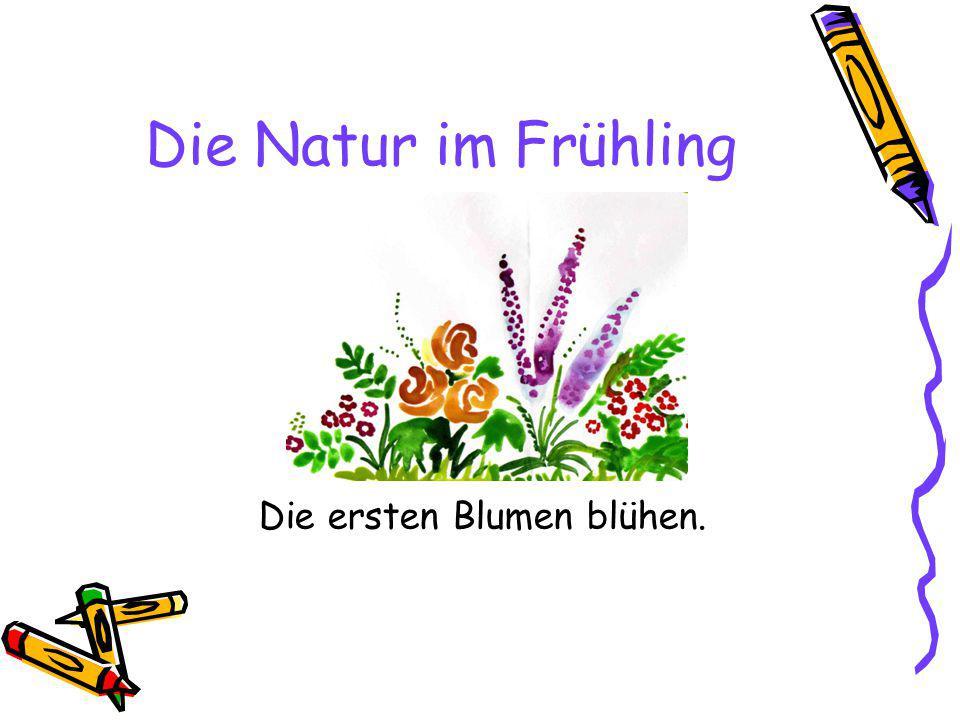 Die Natur im Frühling Die ersten Blumen blühen.