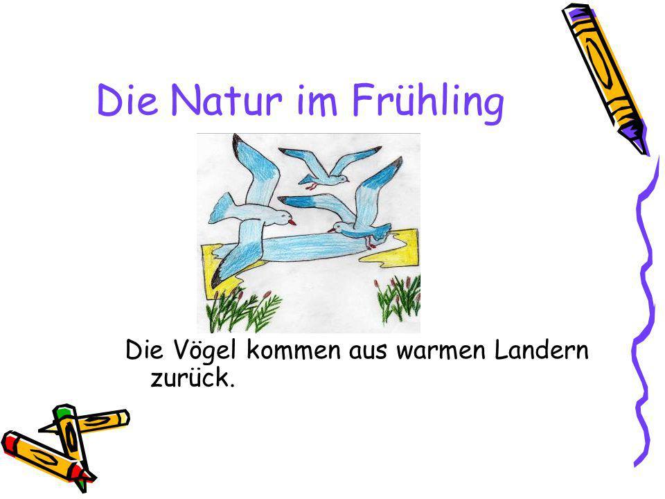 Die Natur im Frühling Die Vögel kommen aus warmen Landern zurück.