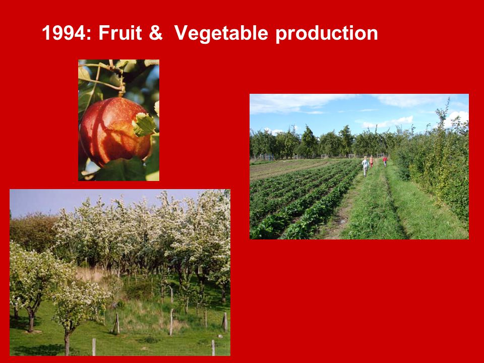 1994: Fruit & Vegetable production