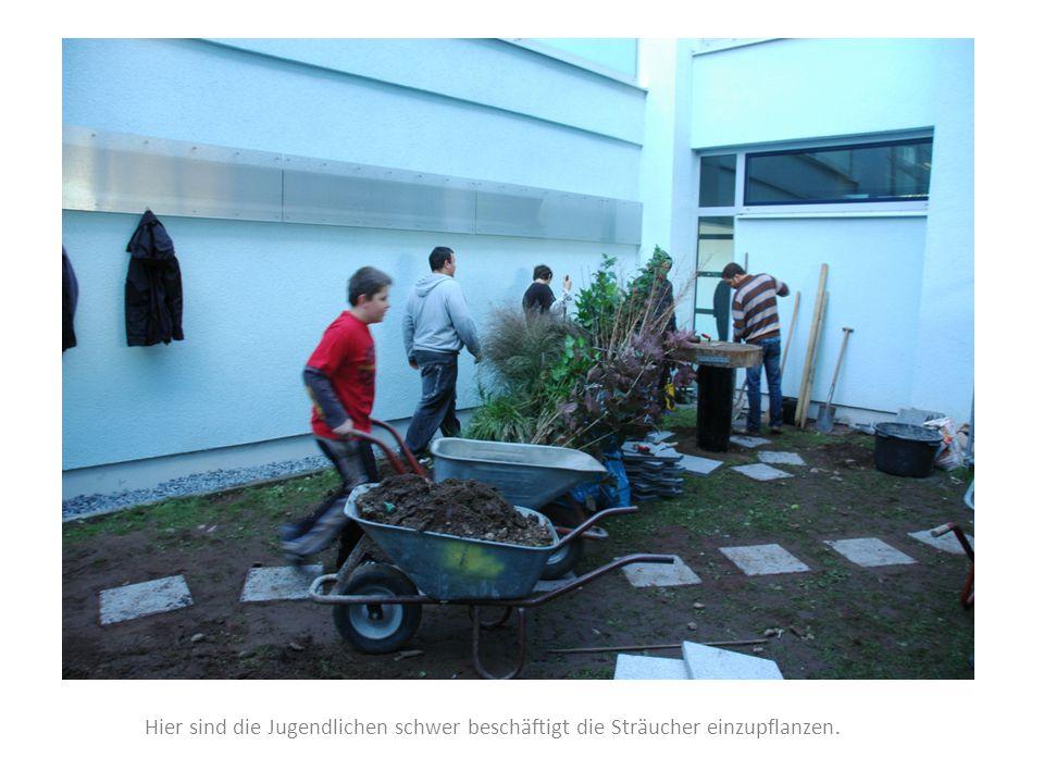 Hier sind die Jugendlichen schwer beschäftigt die Sträucher einzupflanzen.