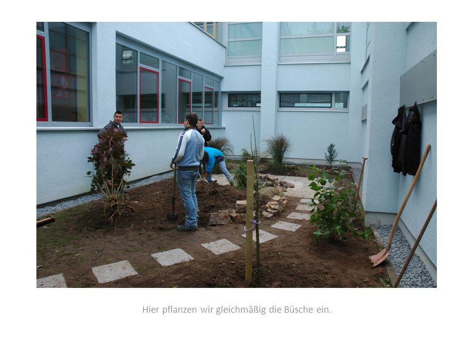 Hier pflanzen wir gleichmäßig die Büsche ein.