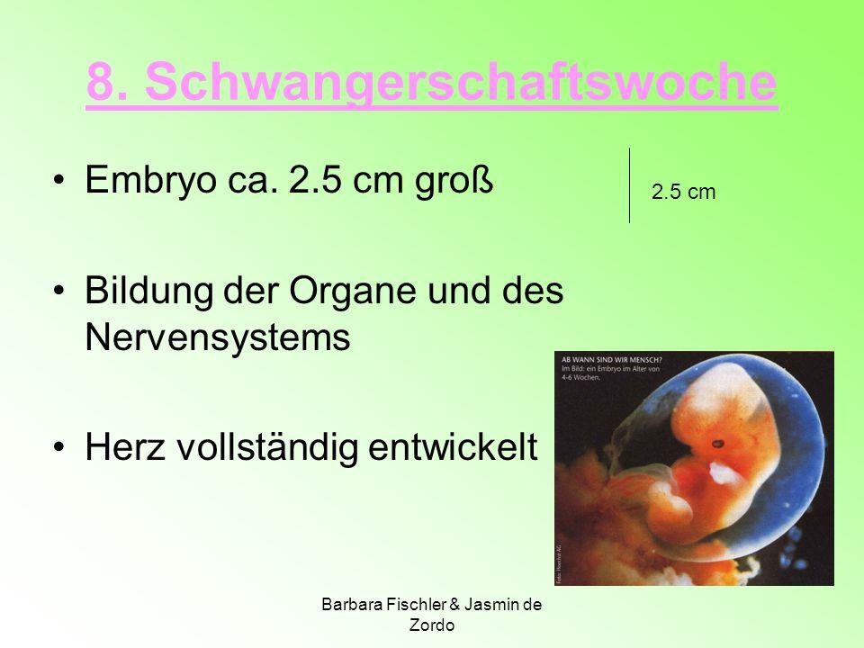 8. Schwangerschaftswoche Embryo ca. 2.5 cm groß Bildung der Organe und des Nervensystems Herz vollständig entwickelt 2.5 cm