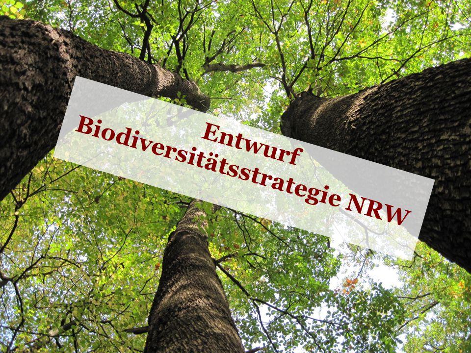 Waldbauernverband Nordrhein-Westfalen e.V. © Waldbauernverband 2011 5 Entwurf Biodiversitätsstrategie NRW