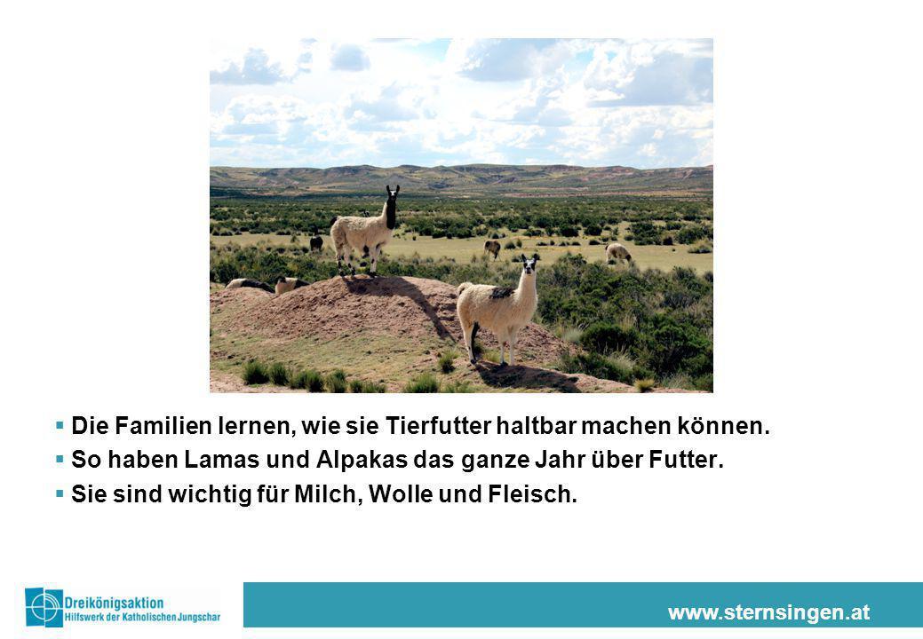 www.sternsingen.at  Die Familien lernen, wie sie Tierfutter haltbar machen können.  So haben Lamas und Alpakas das ganze Jahr über Futter.  Sie sin
