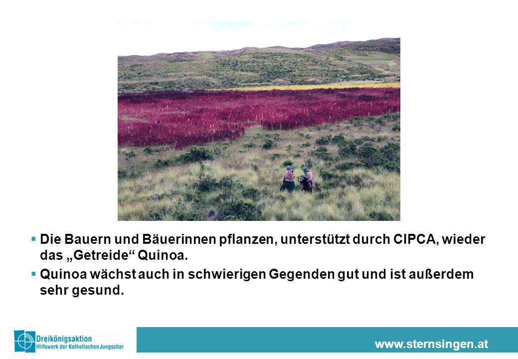 """www.sternsingen.at  Die Bauern und Bäuerinnen pflanzen, unterstützt durch CIPCA, wieder das """"Getreide"""" Quinoa.  Quinoa wächst auch in schwierigen Ge"""