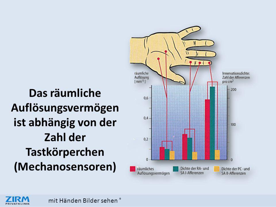 mit Händen Bilder sehen ® Das räumliche Auflösungsvermögen ist abhängig von der Zahl der Tastkörperchen (Mechanosensoren)