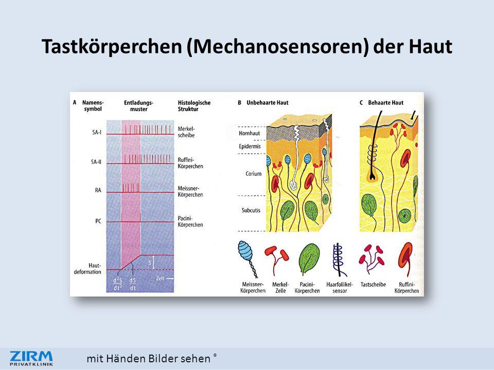 mit Händen Bilder sehen ® Tastkörperchen (Mechanosensoren) der Haut